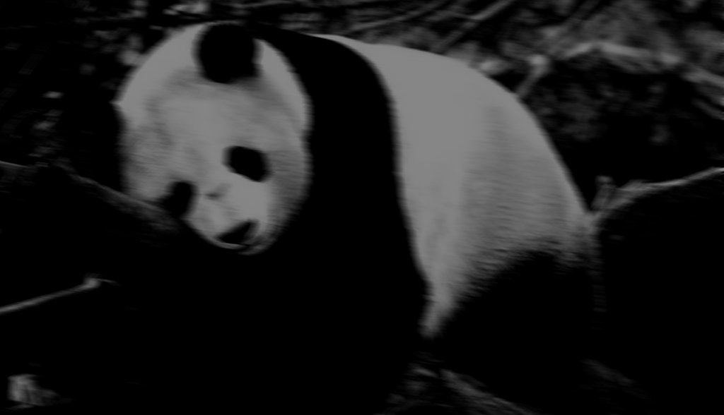 The day i fucked a panda u2013 part 1 being stuart